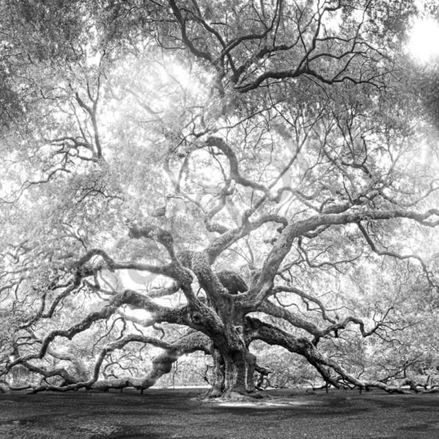 5067 to 5084 angel oak b w 4x6 light center up7qt2