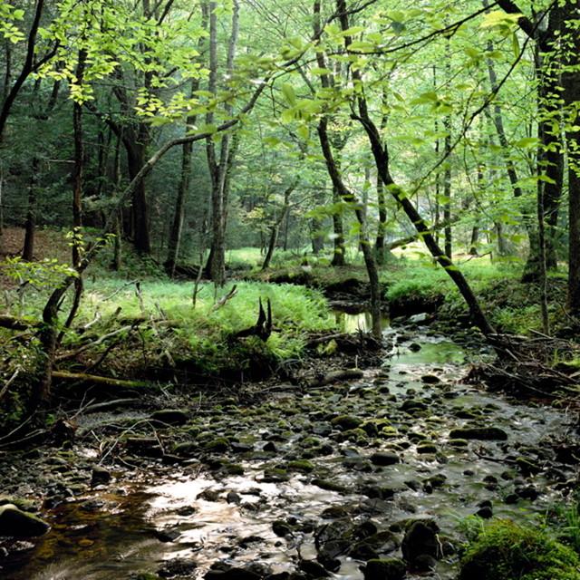 Spring stream 4x6 wlqqrn