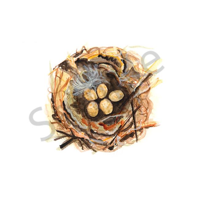 Bird nest study 5 nl5iei