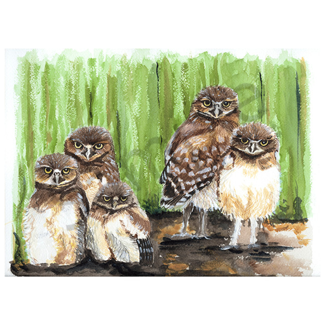 Young burrowing owls ddt5si