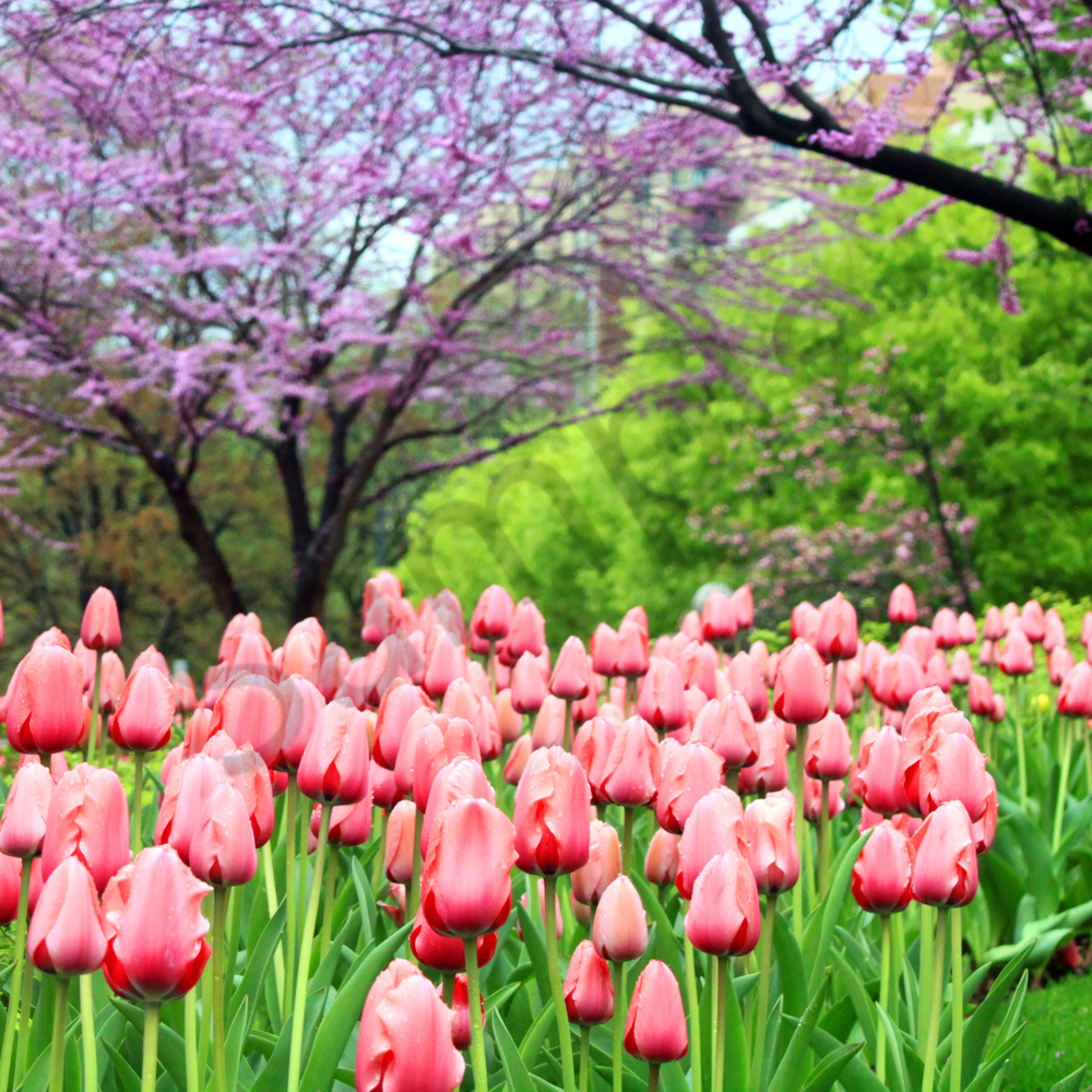 Tulips and trees website ybis8n