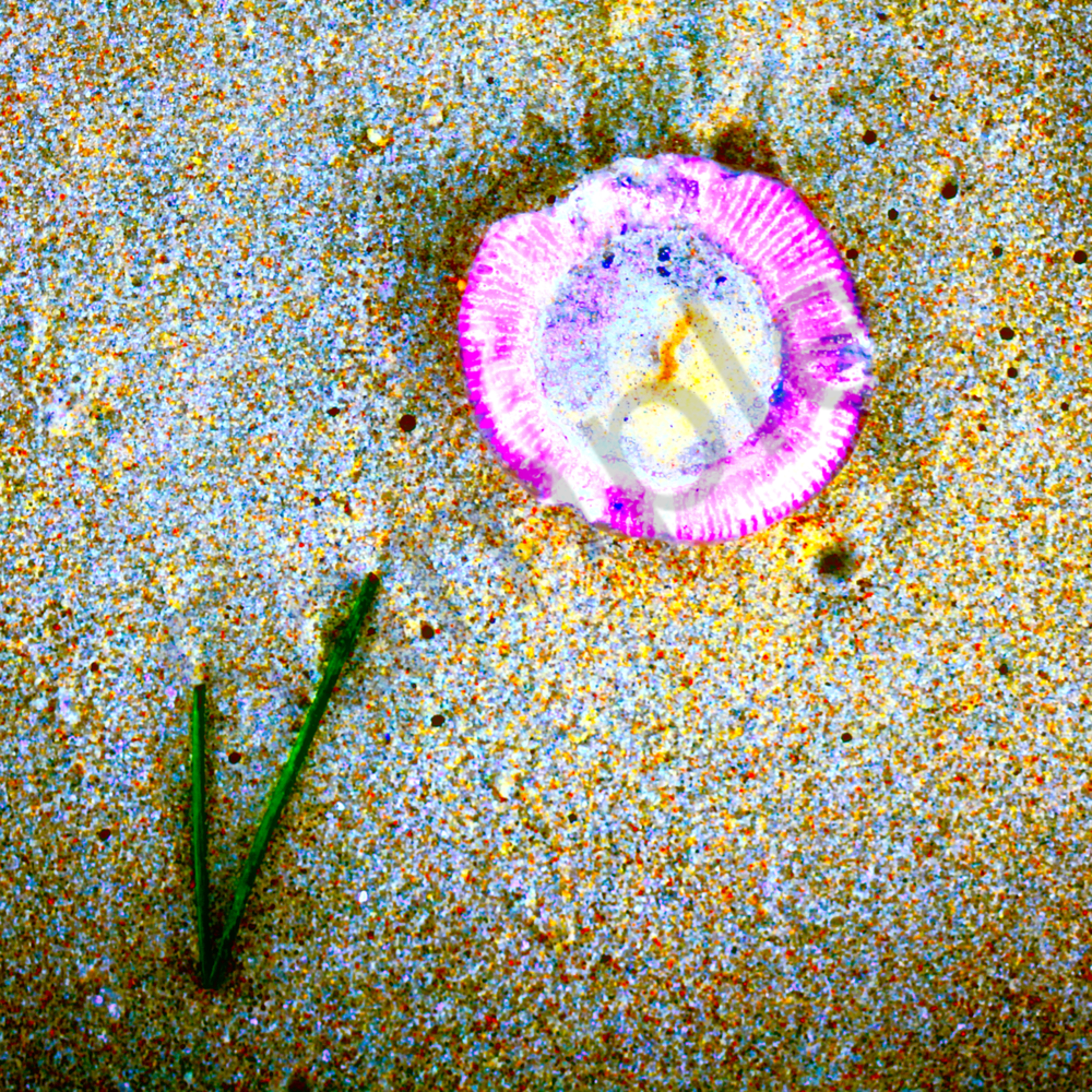 Jellyfish and seaweed website o2l1wy