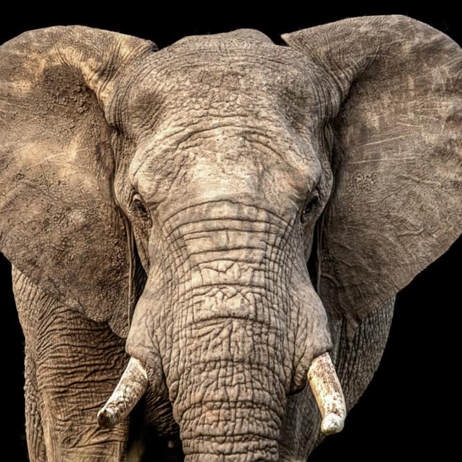 Elephant face eukrhq