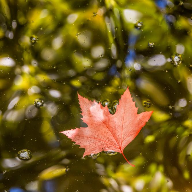 Red leaf water hpgn6l