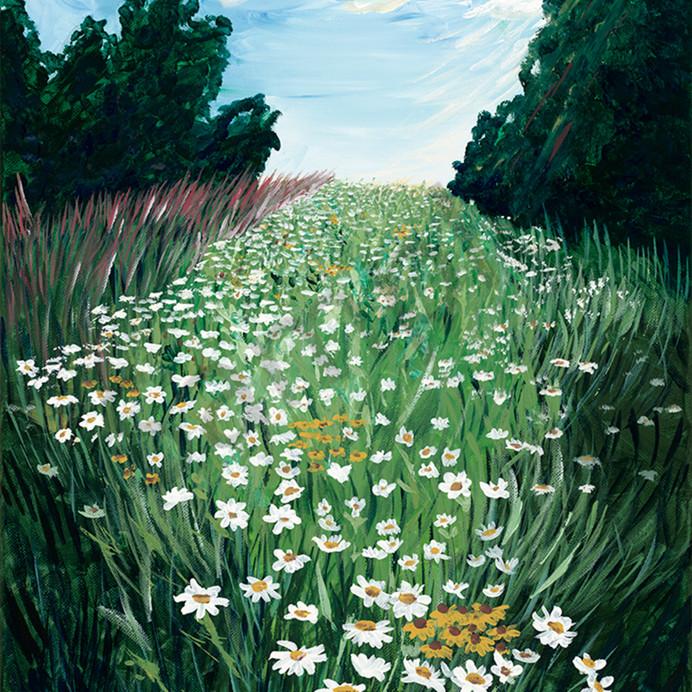 Calhoun daisy field xfnnod