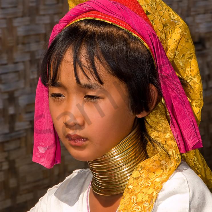 Burmese ring neck bzyj8y