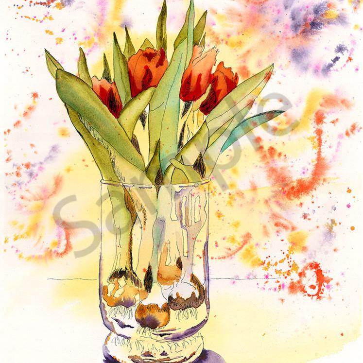 Tulips in glass rlikxd