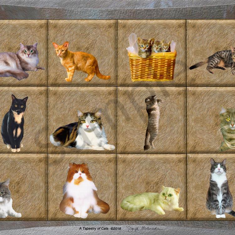 Final cats d4y37l