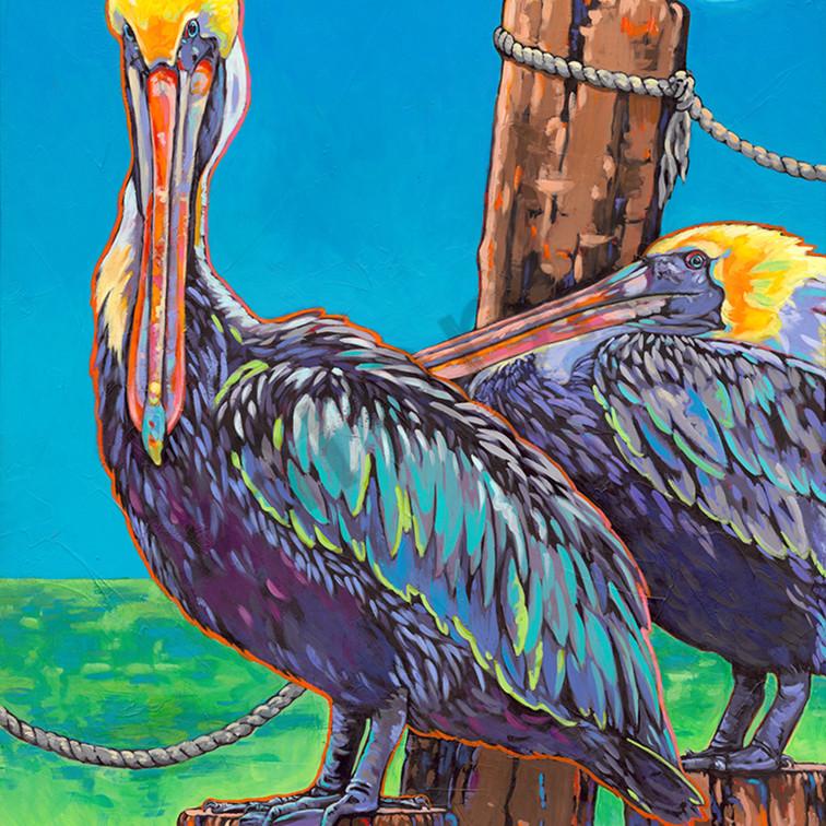 Pelicans sm bxr8ct