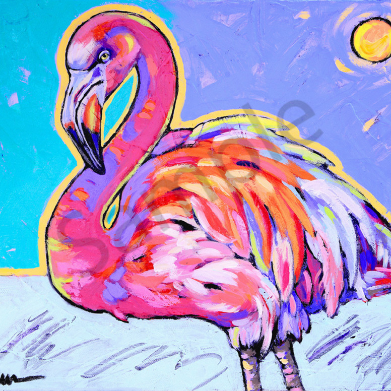 Flamingo dances under the sun rmks5w