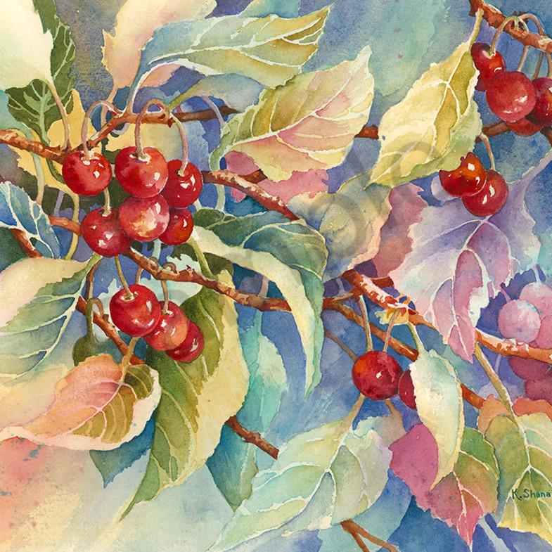 Cherry delight ilq3m2