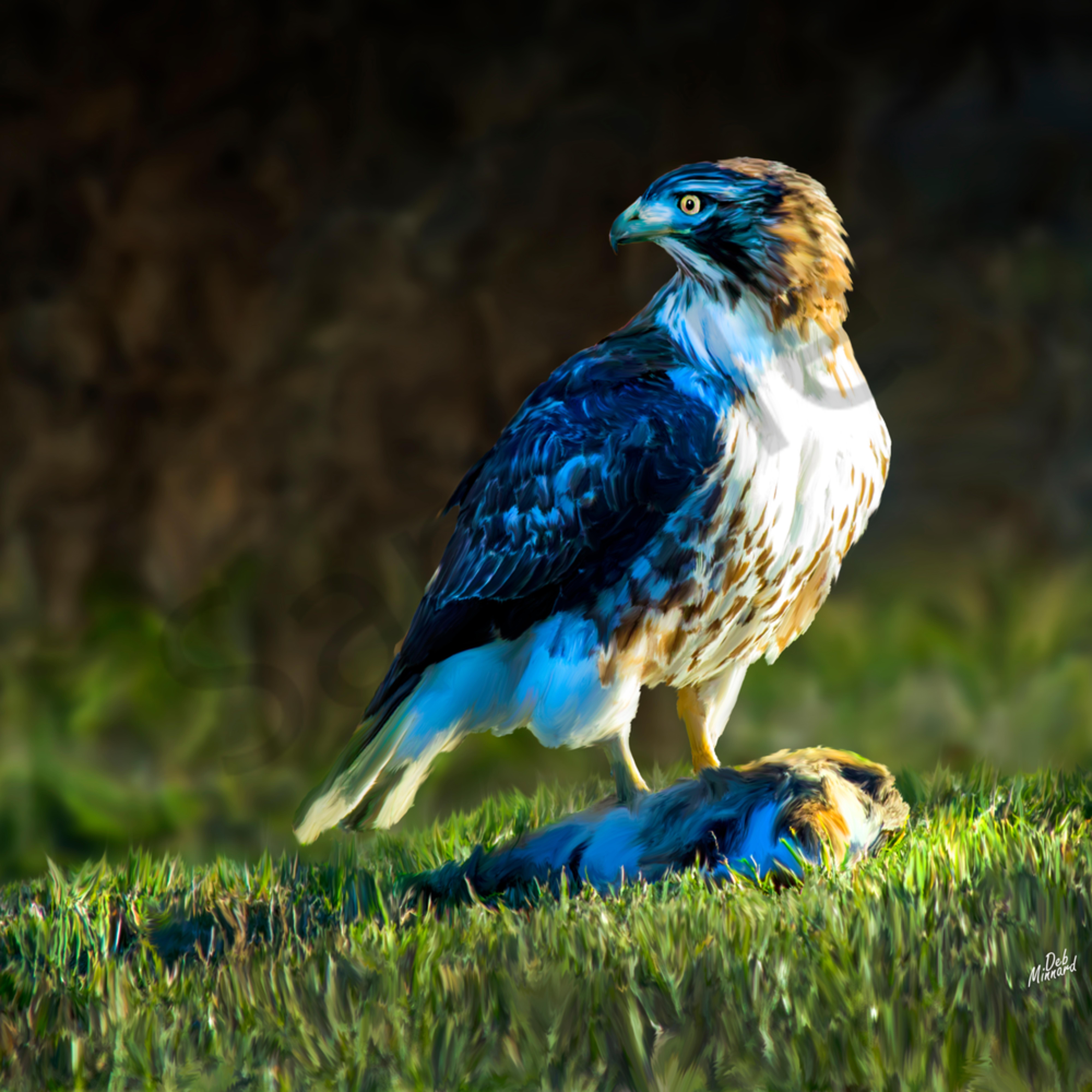 Hawk on rabbit iwyydk