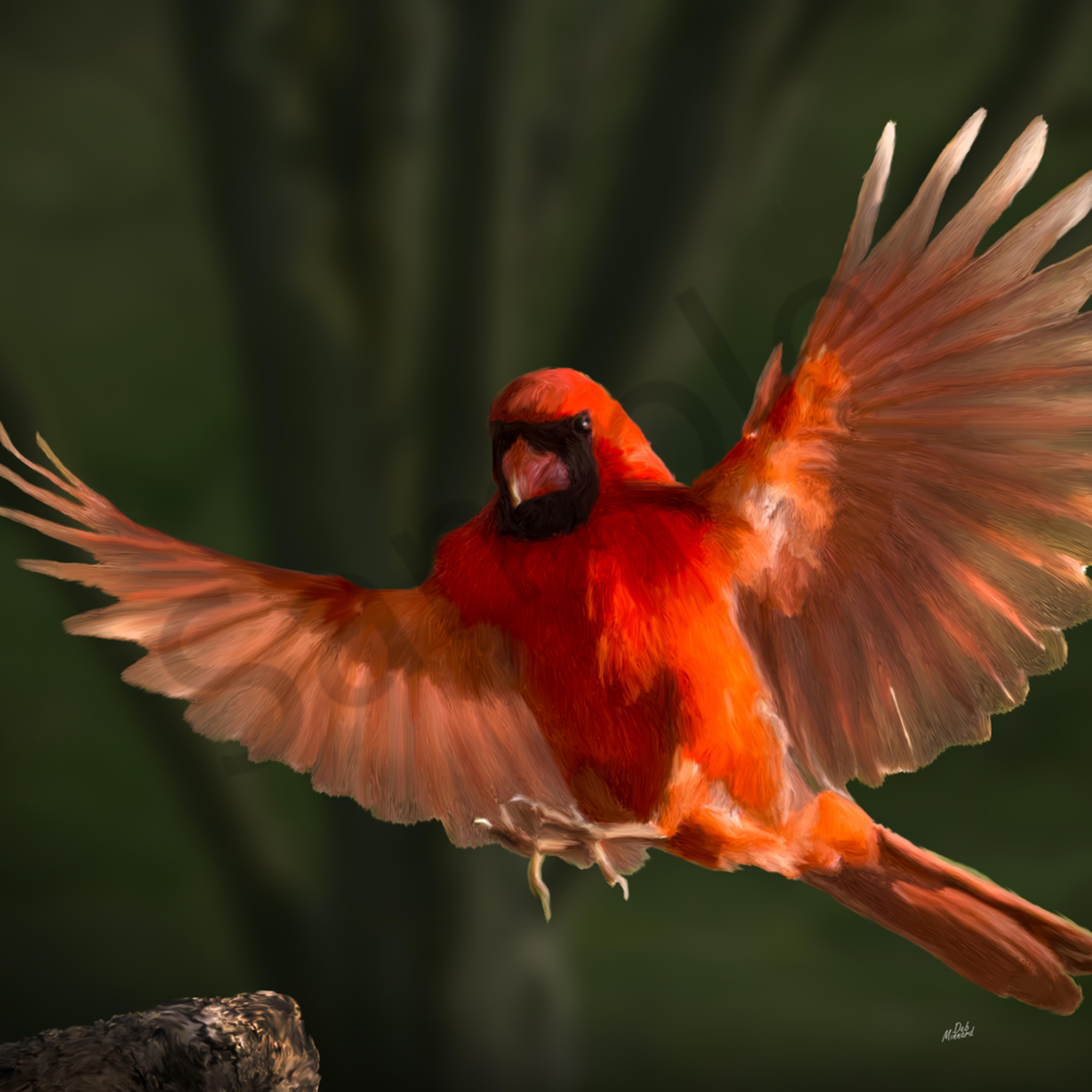 Cardinal in flight tvarmr