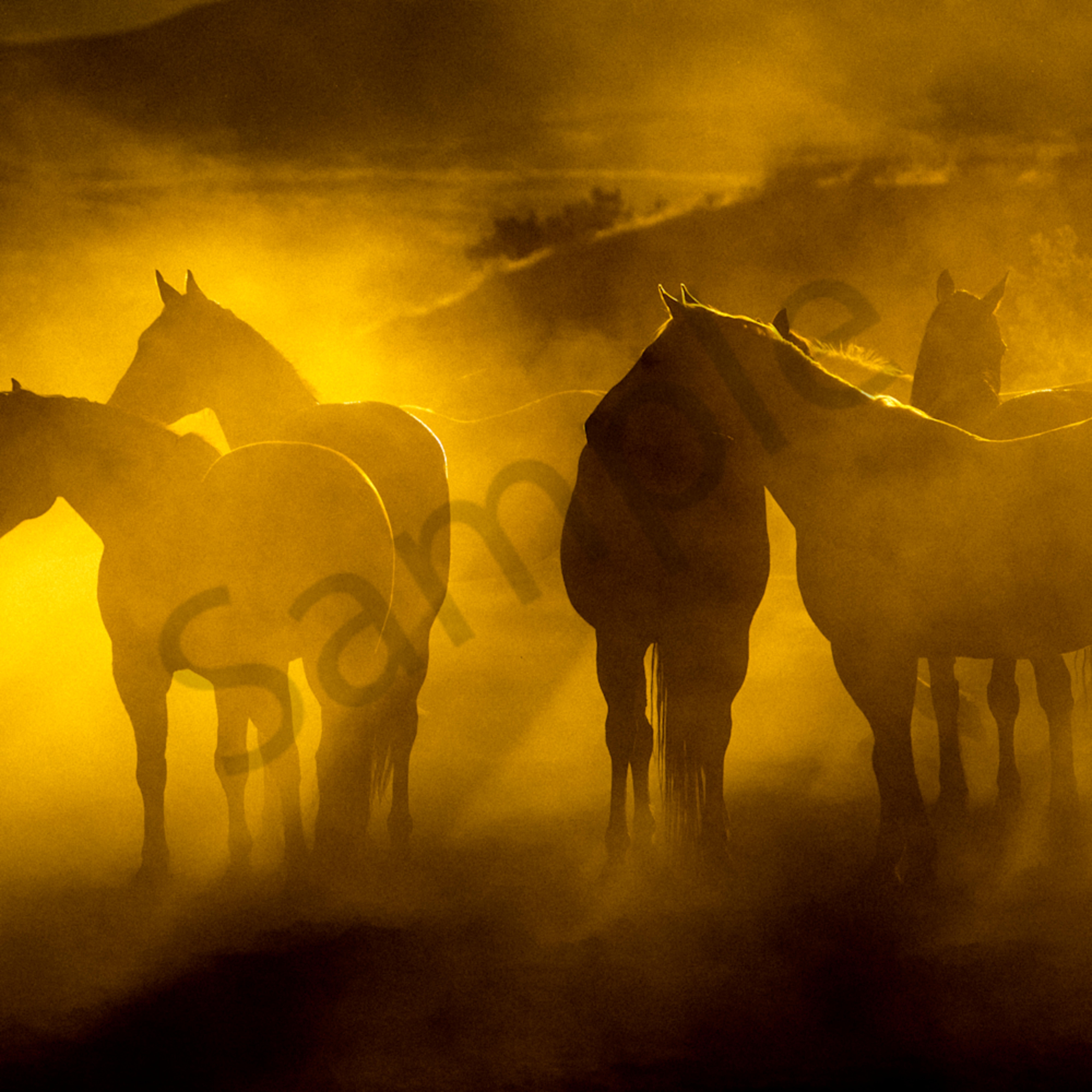 Cowponies at dusk dccr1y