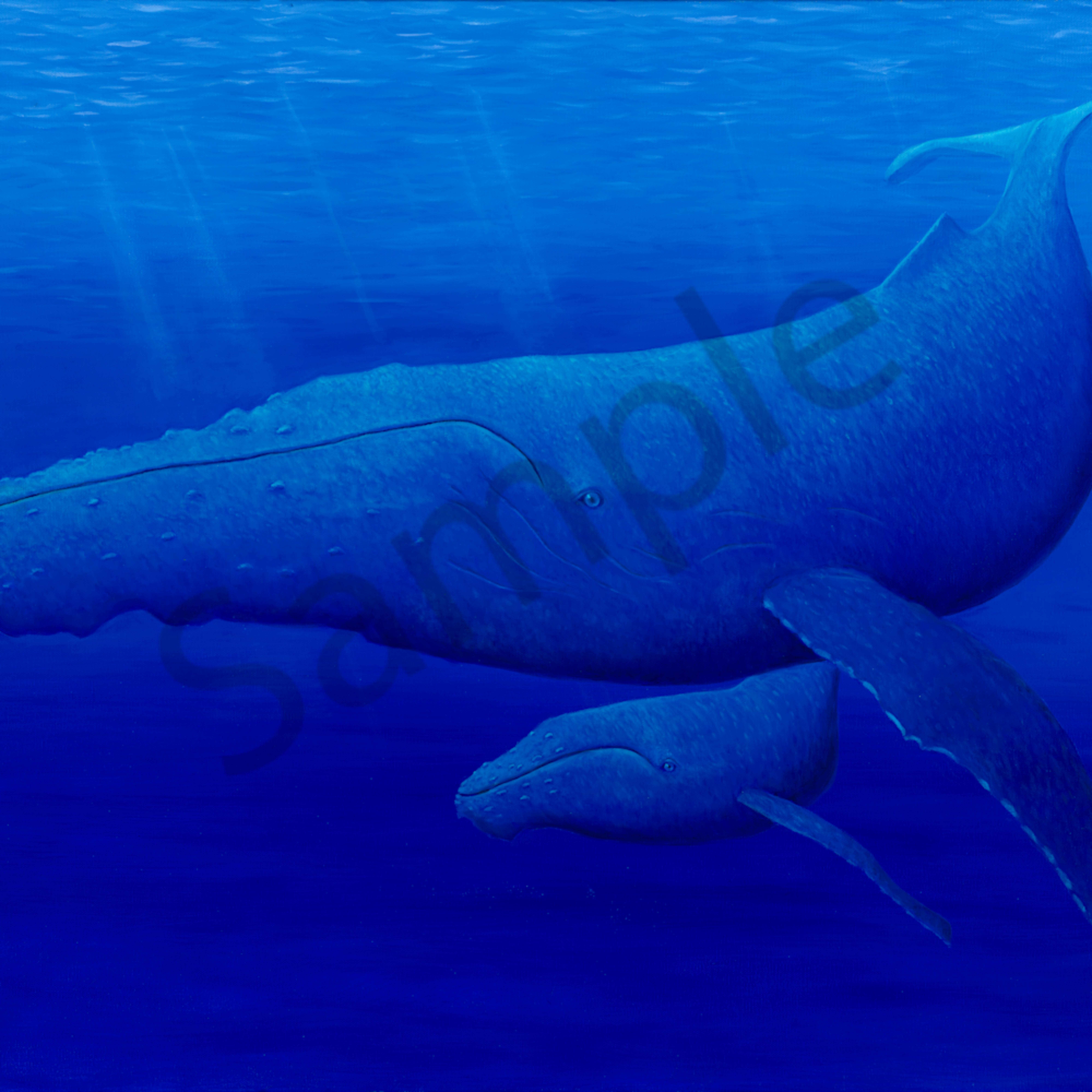 Whales qn7zgn