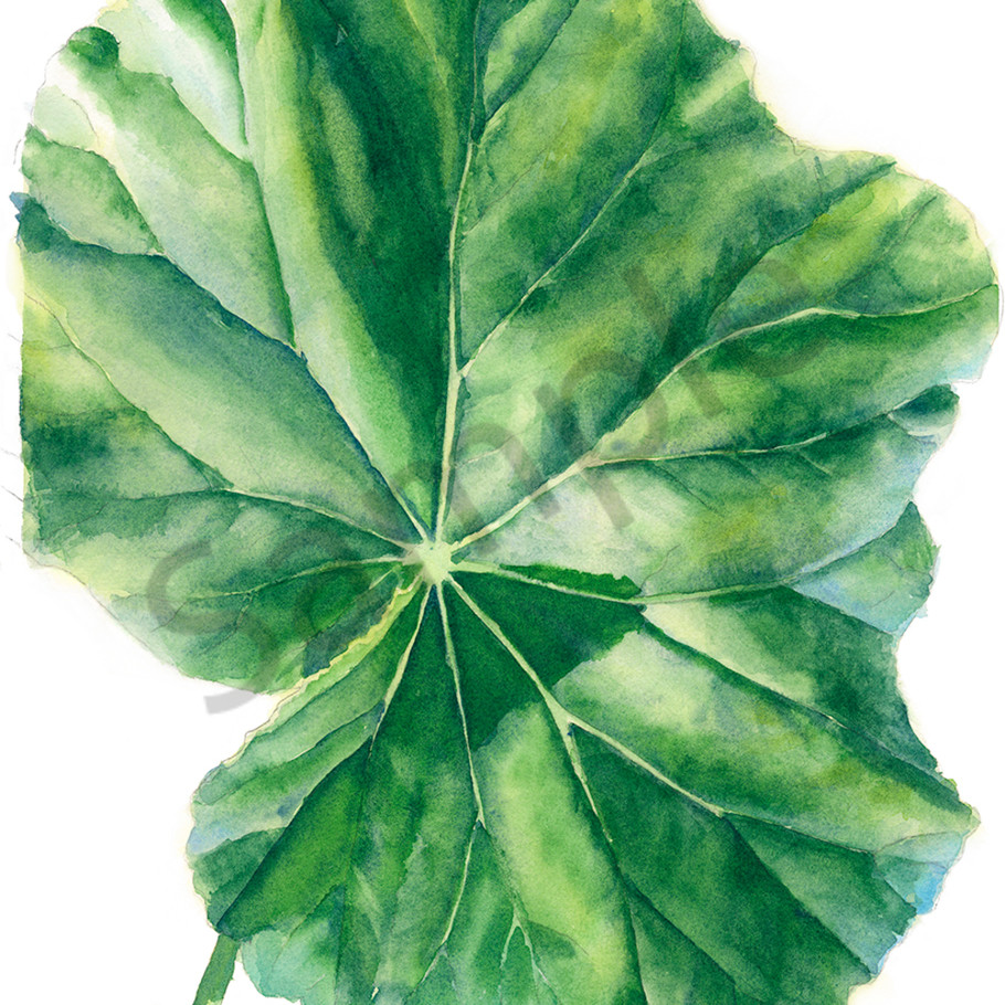 Nr single begonia leaf nxfqqc