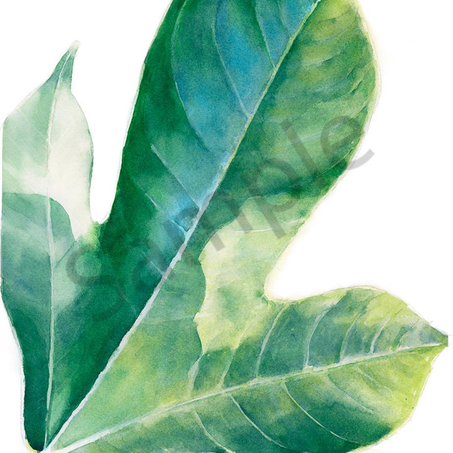 Single jatropha leaf eqsjpr
