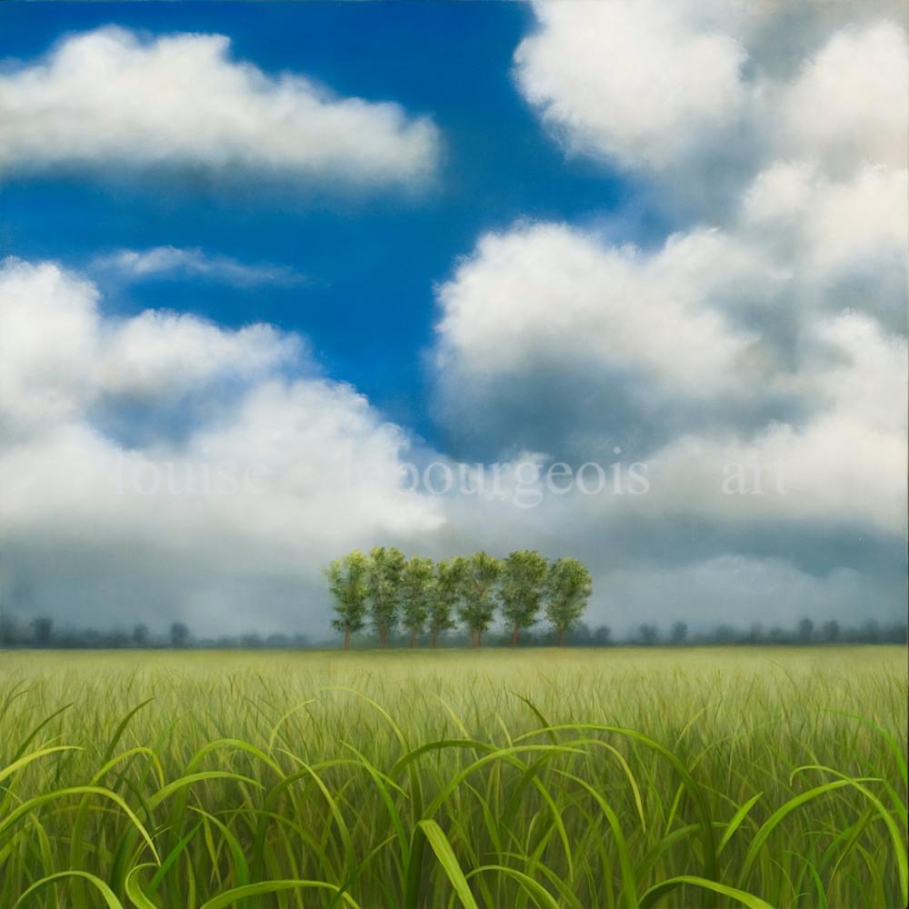 353 cane field eld8xl