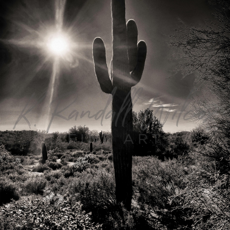 Krw shine brightly saguaro desert cjhw3m