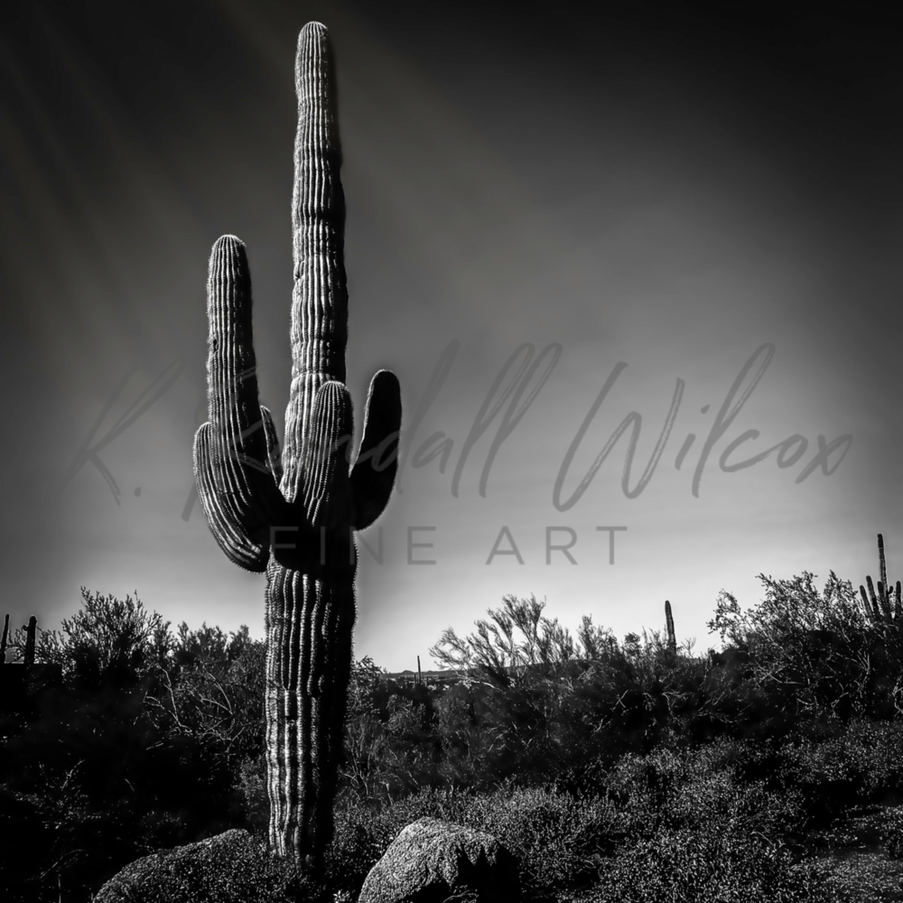 Krw lone saguaro asf v1 pzwwun