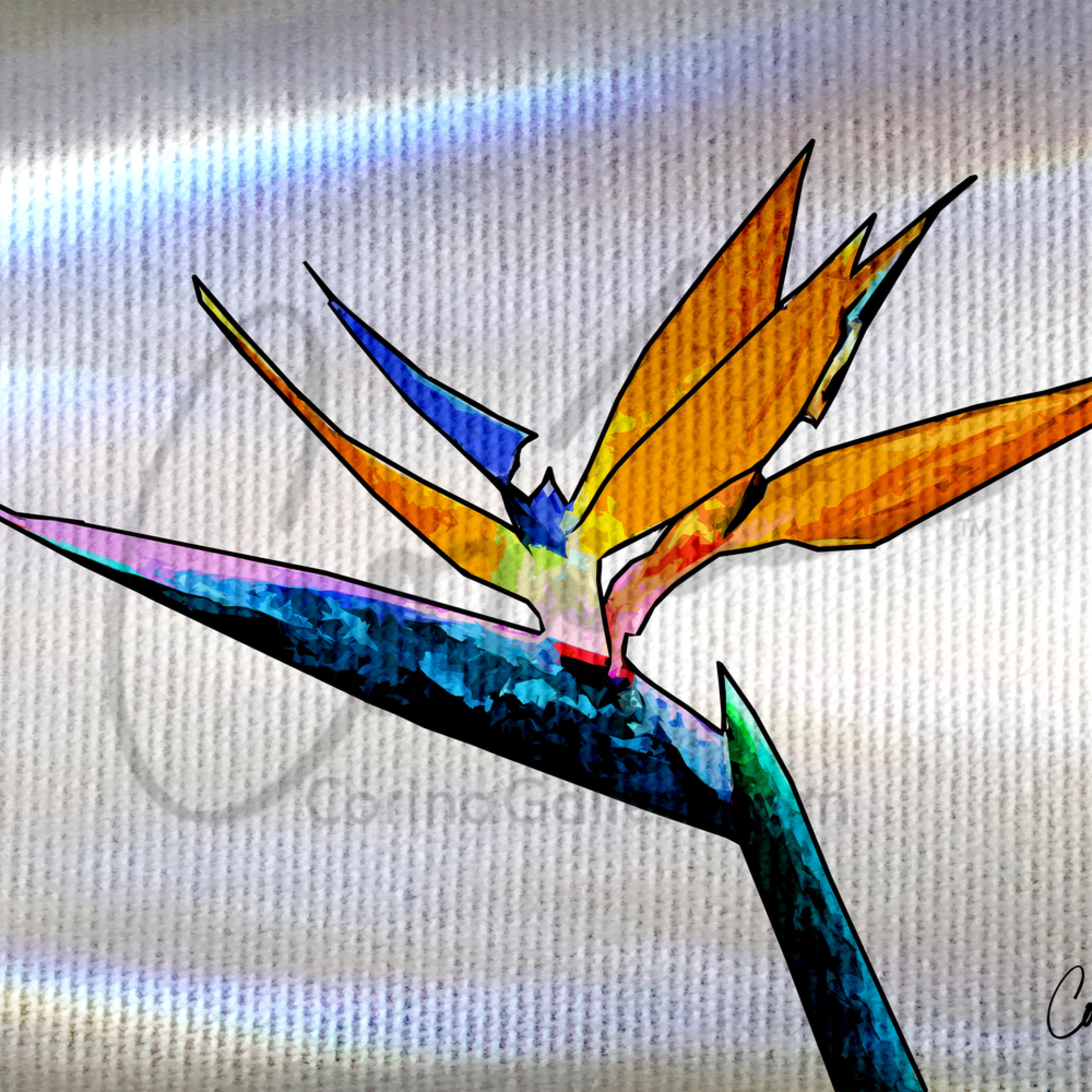 Corinabakke bird of paradise white dvndga