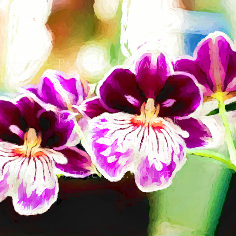 Orchid twins uheans
