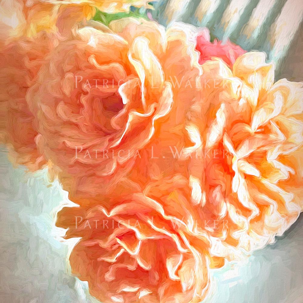 Roses in apricot pcwunt