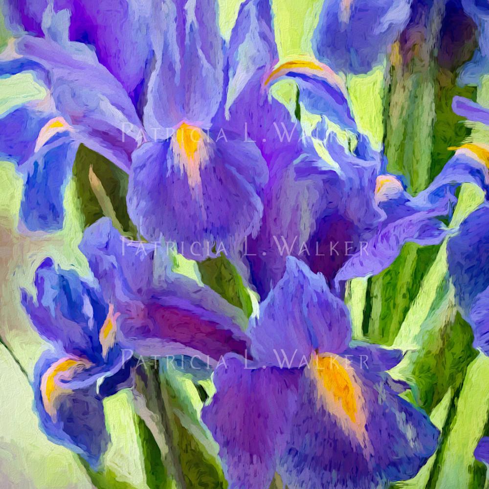 The iris affair continues lwccrp