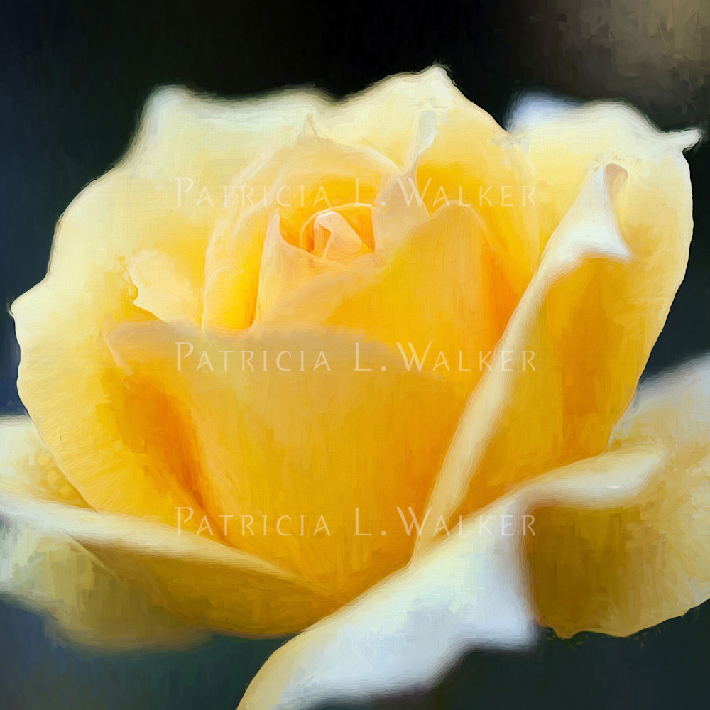 Yellow rose for mickey kcm4l1