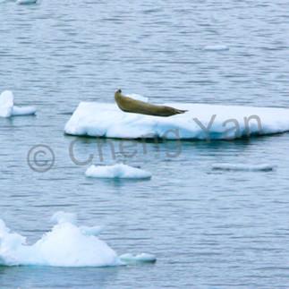 Seals 005 s9rx4k