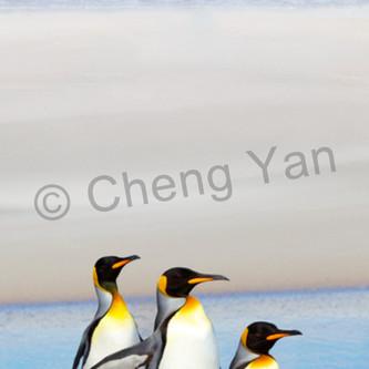 Penguins 011 iyjnu6