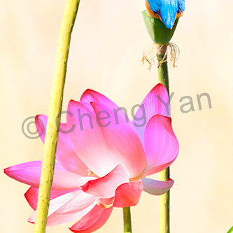 Kingfishers 058 oigfgn