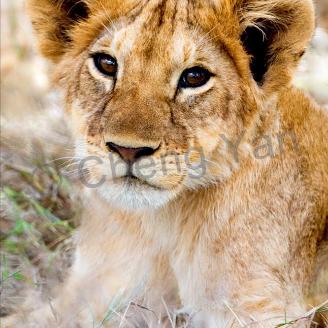 Lions 002 nllbzz