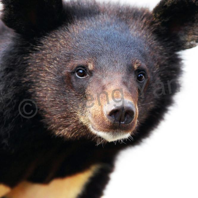 Bears 003 xlkpjx
