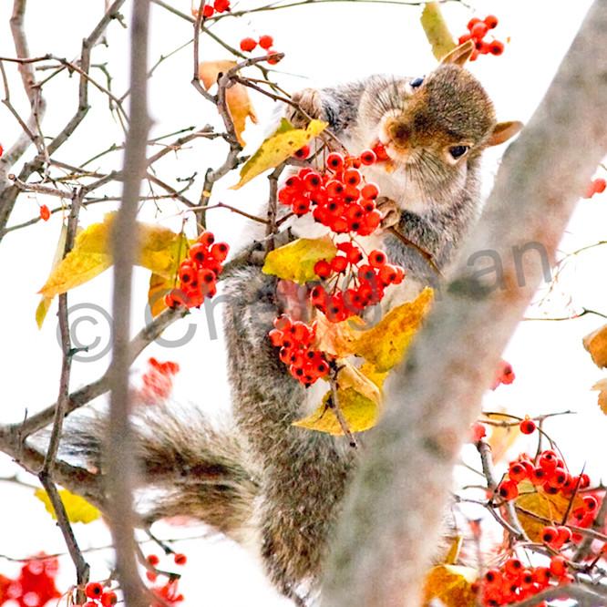 Squirrels and chipmunks 006 zjxqir