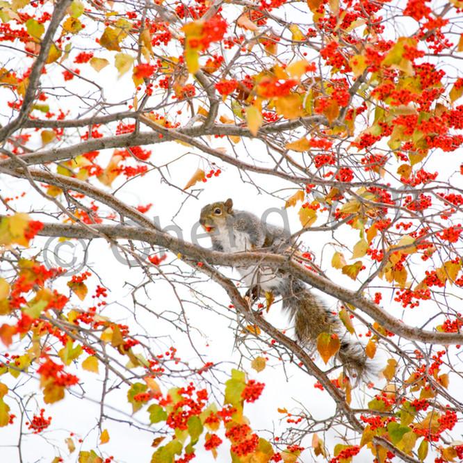 Squirrels and chipmunks 001 vdcn8k