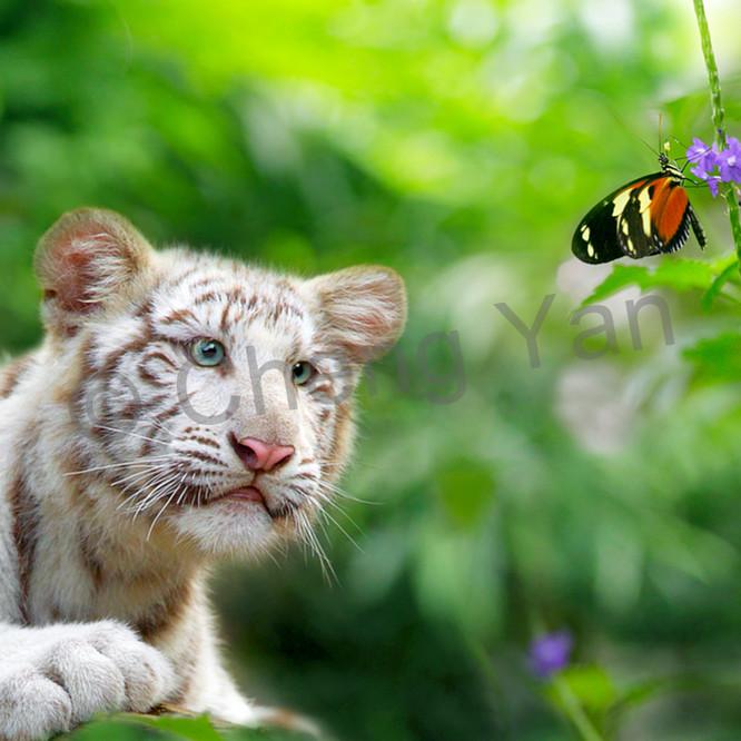 Tigers 012 wvemjv