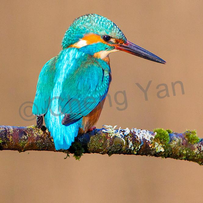 Kingfishers 037 n8pbr9