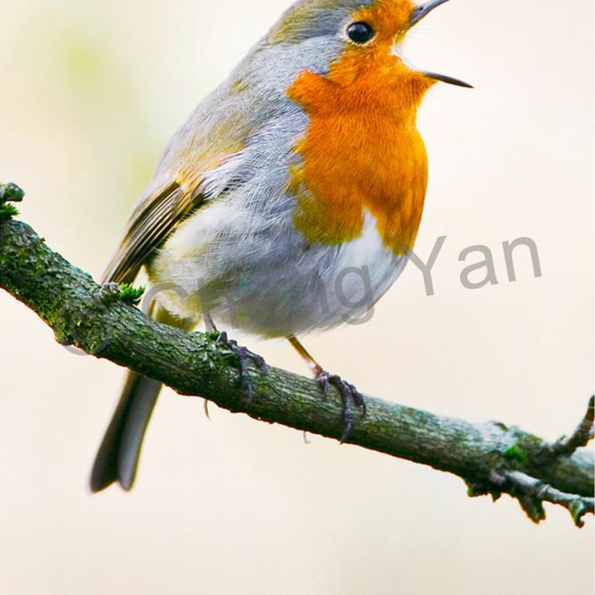 Robins 006 g97jnj