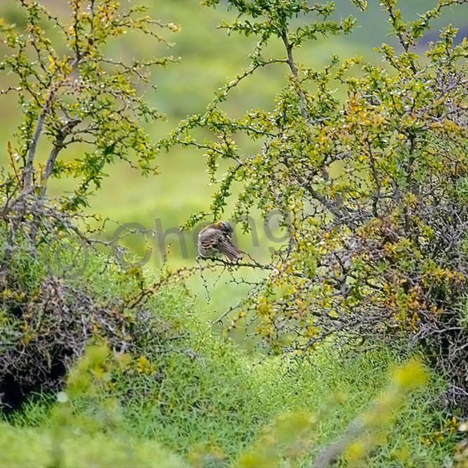 South american birds 041 fjaak2