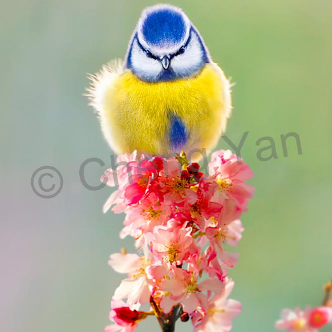 Garden birds 01 op46gt
