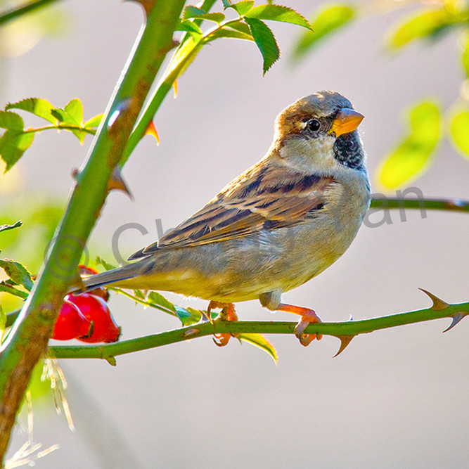 Garden birds 14 etlbcf