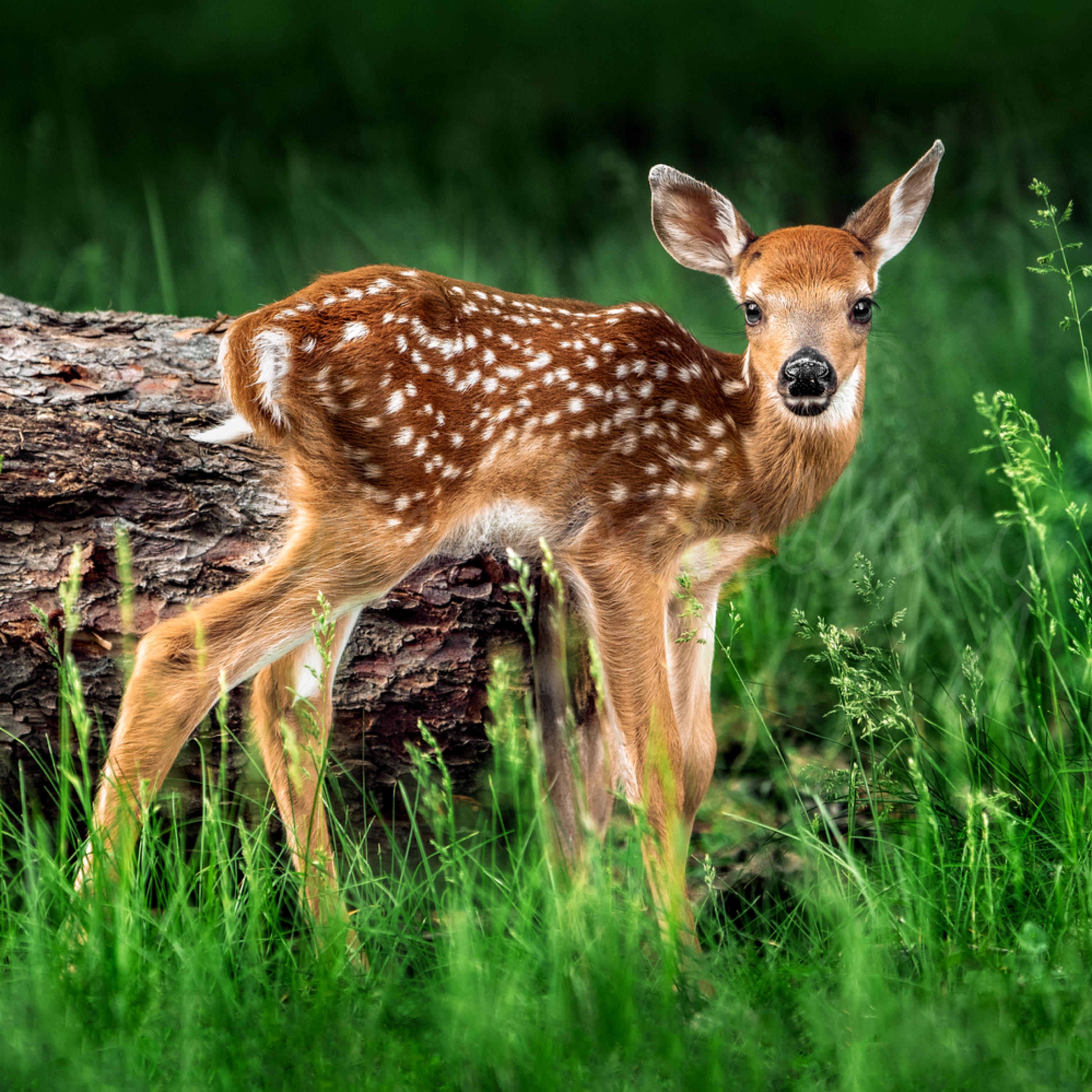 Bambi eftd57