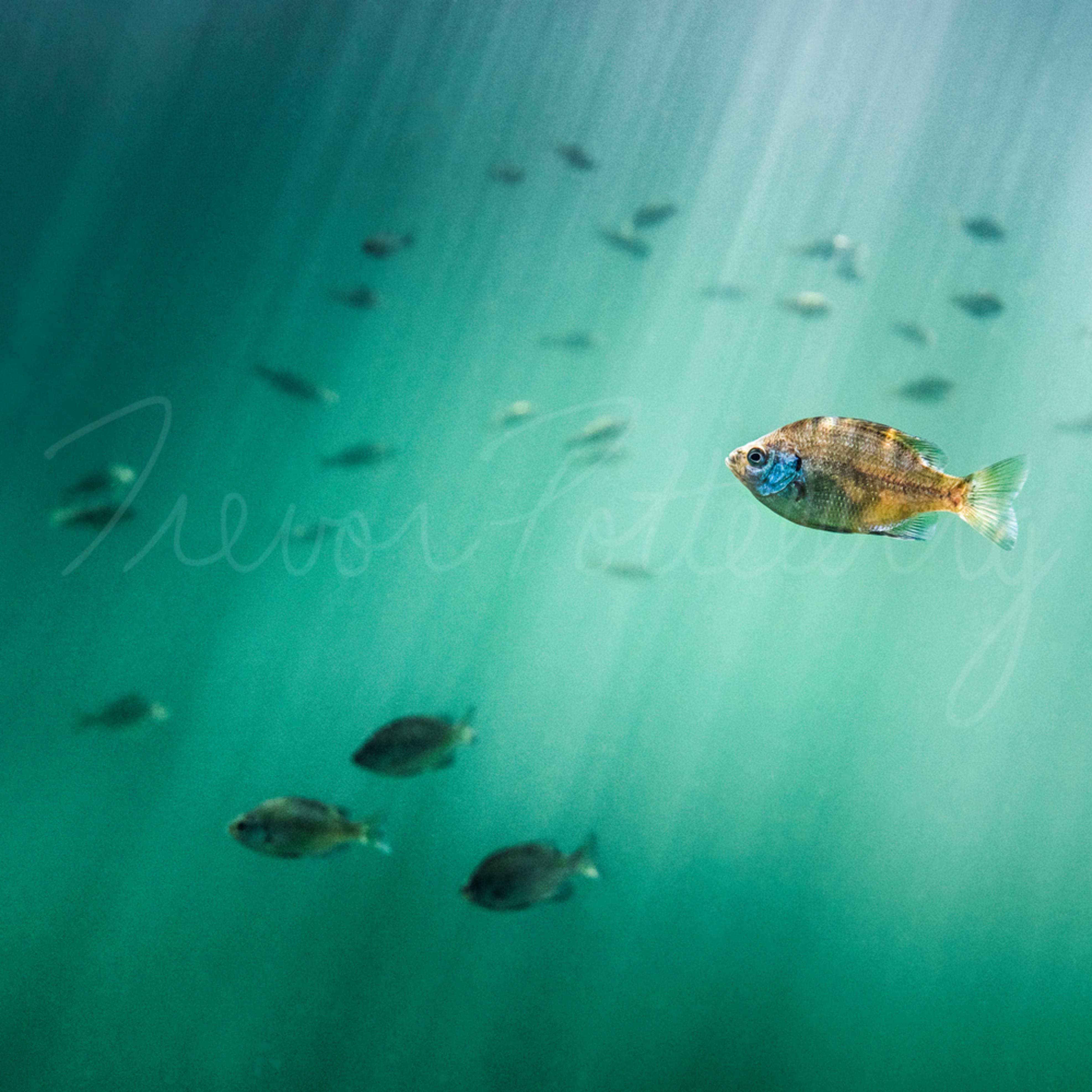 Jewel of the sea kbnoa1