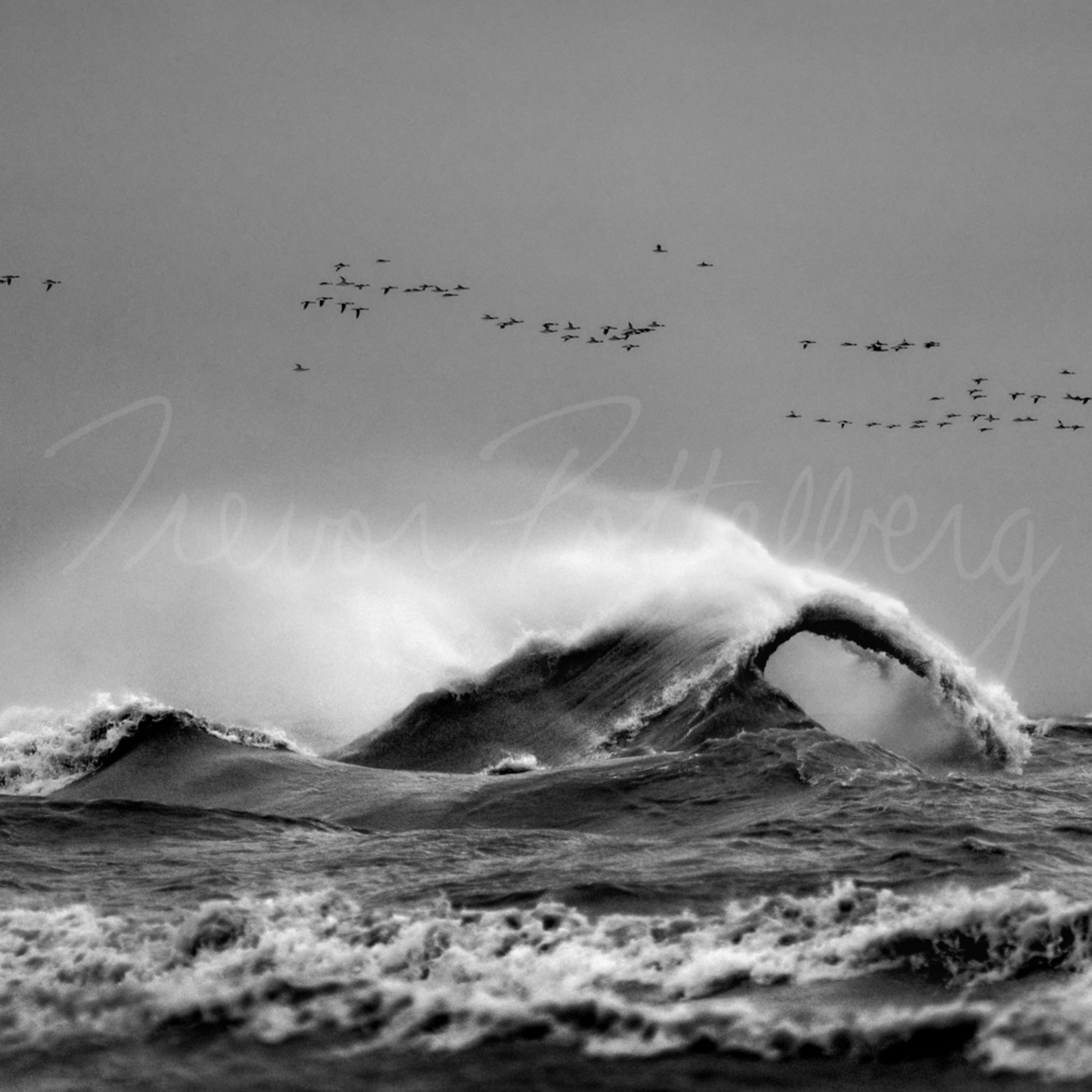 Wings over water hgbdne