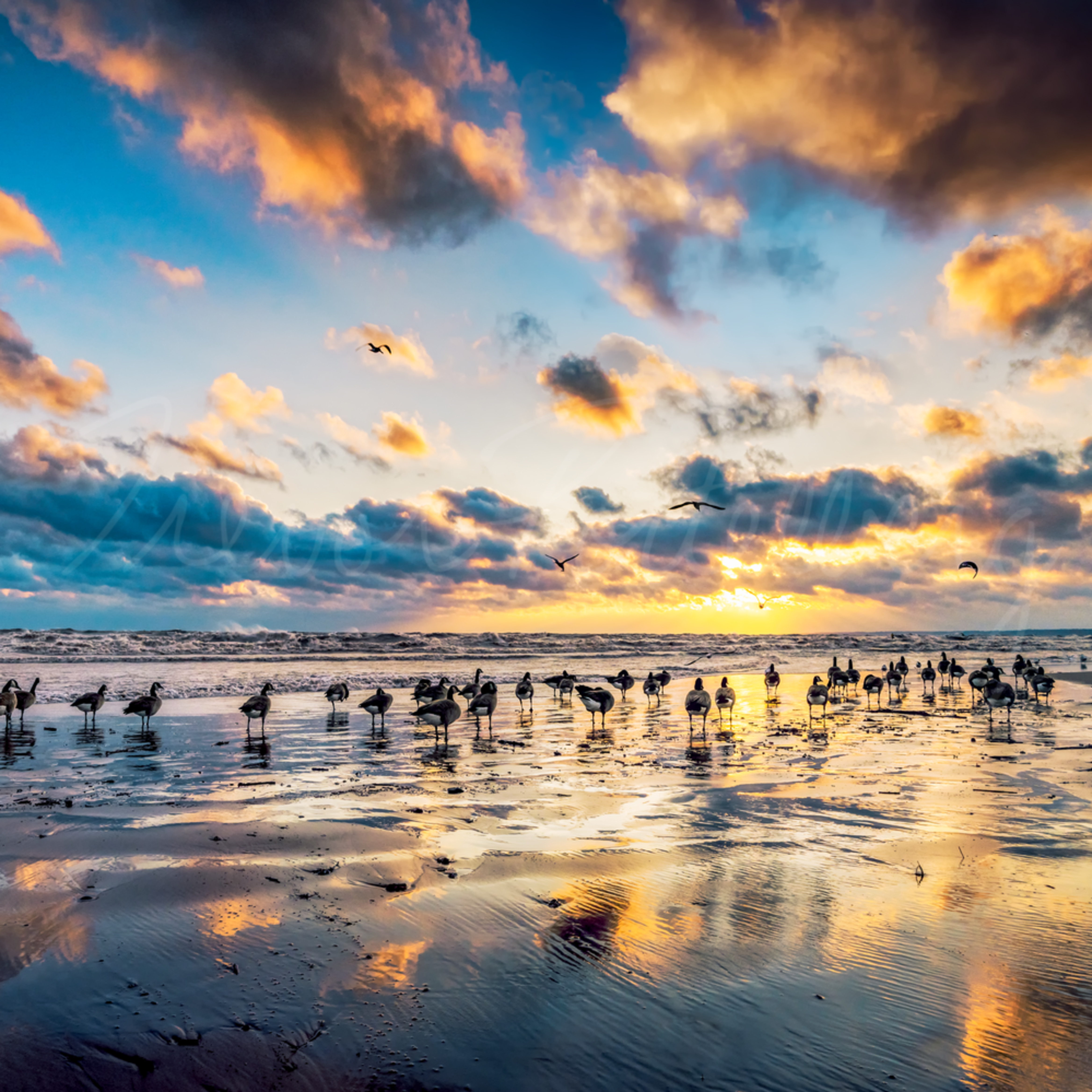 Paradise shores mtgzwy