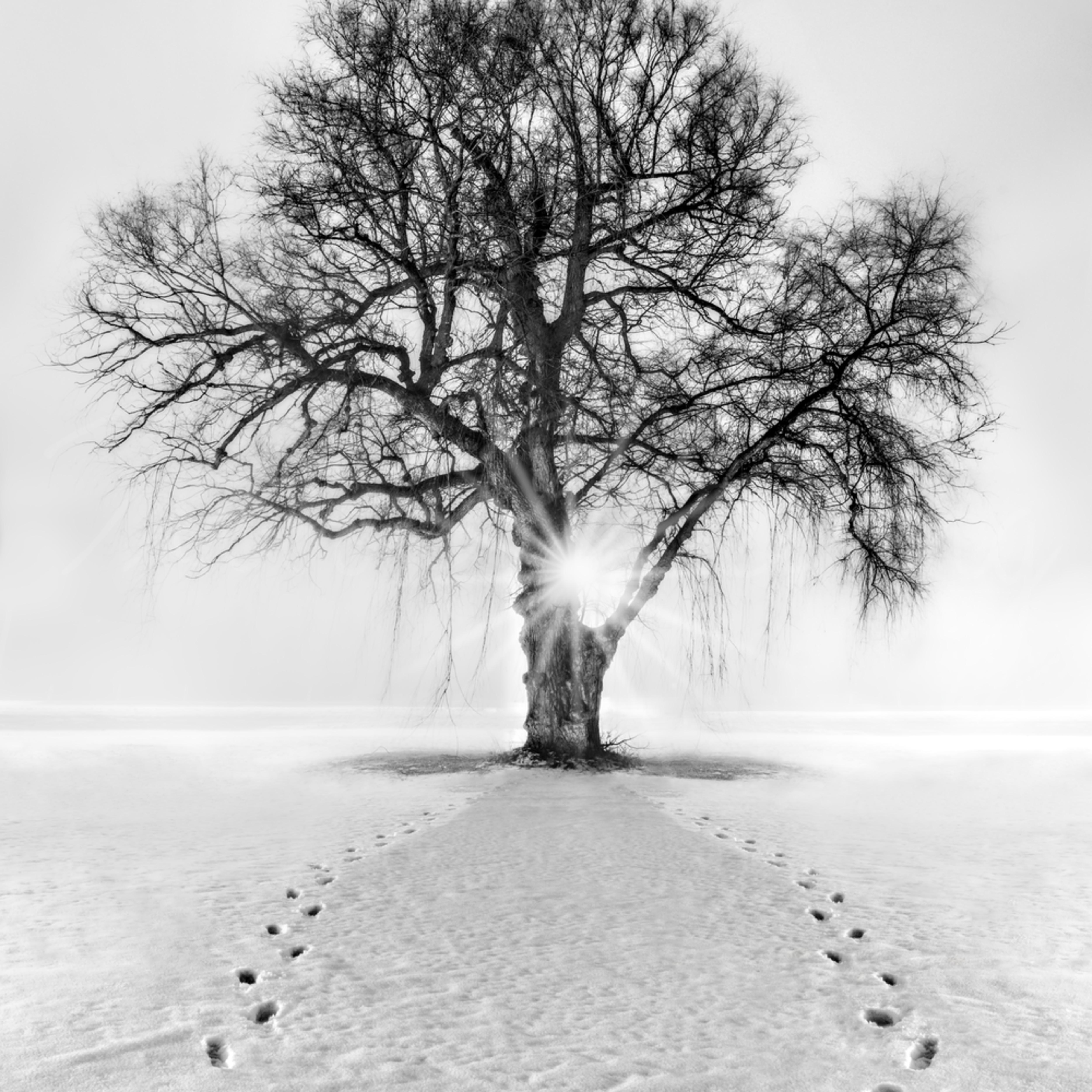 Meet me behind the kissing tree xmrreg