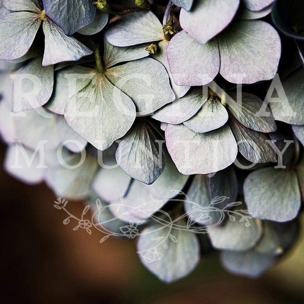 Chandelier hydrangea zizip3