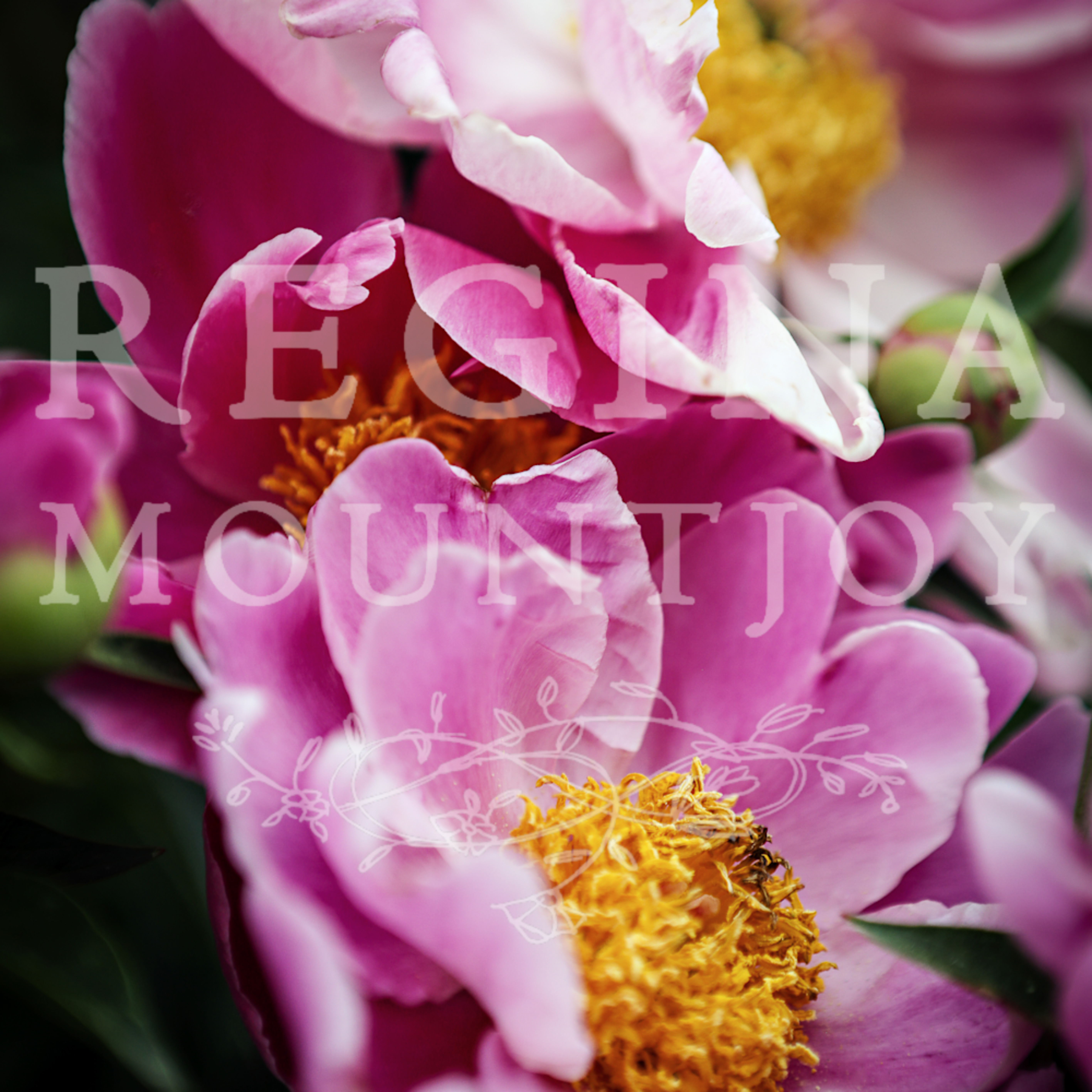 Visions of peonies fhzmpd
