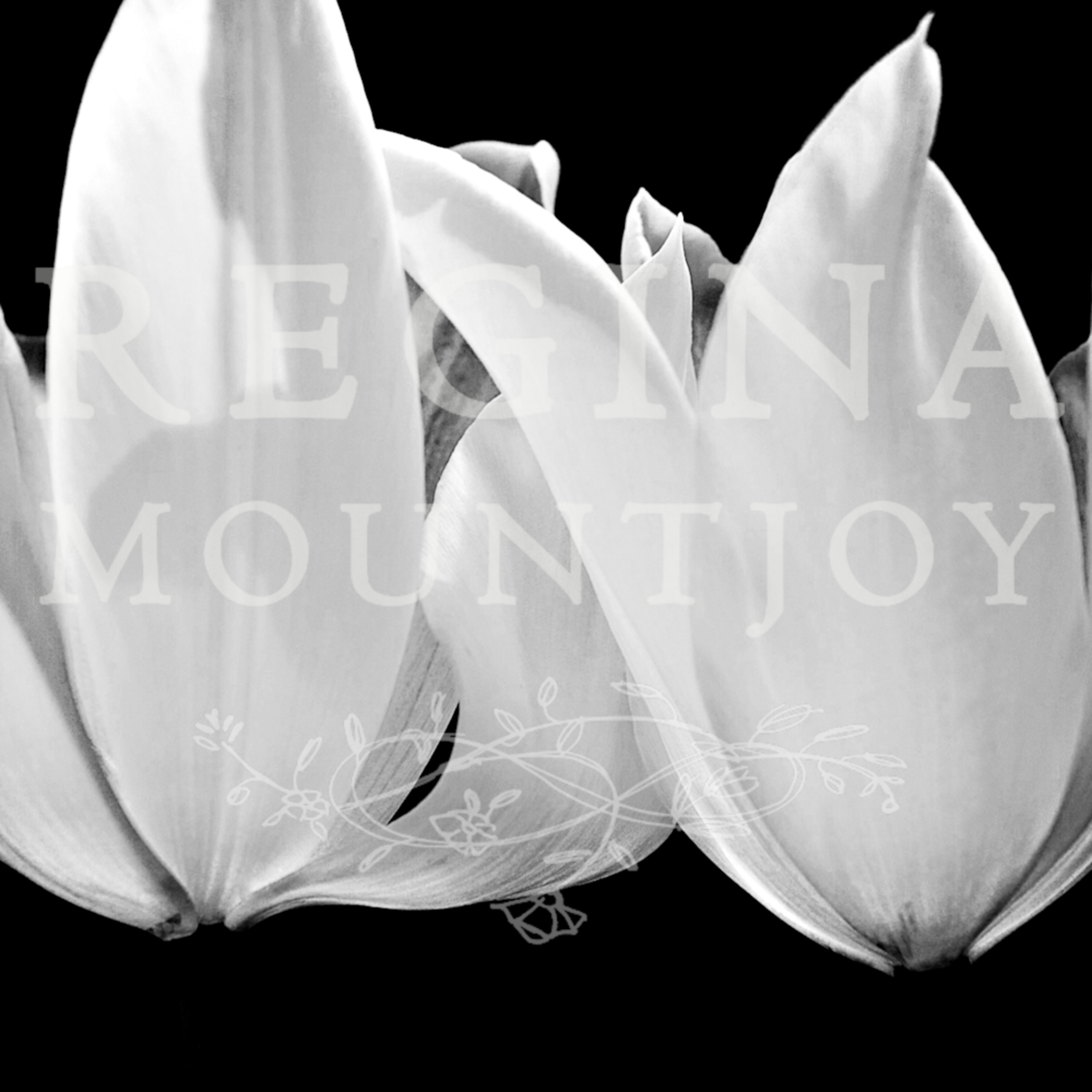 Angel wing tulips rqktcu
